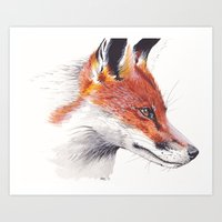 British Red Fox Art Print