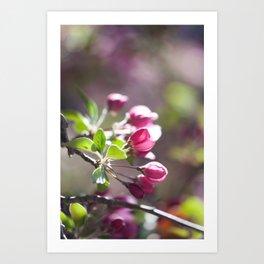 Pink Crabapple Buds Art Print