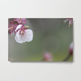 Flower PW 01 Metal Print
