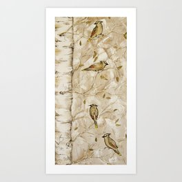 Cedar Waxwings in Birch Tree Art Print