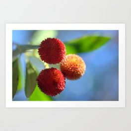 Strawberry tree fruits 8697b Art Print
