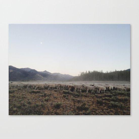 Sheep Dust Canvas Print