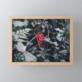 Wild berries in the forest Framed Mini Art Print