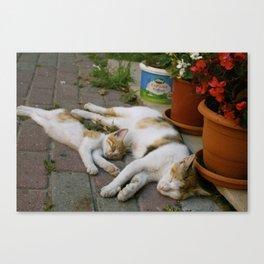 Sleepy mom and kitty Canvas Print