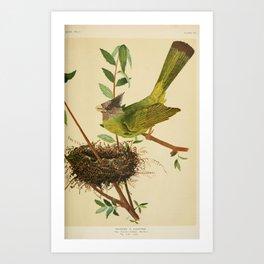 Finch-billed Bulbul, spizixus canipons19 Art Print