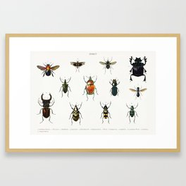 Different types of insects illustrated by Charles Dessalines D' Orbigny (1806-1876) 17 Framed Art Print