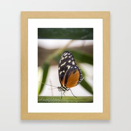 Buttefly at rest Framed Art Print