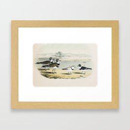 PLATE XL The Killdeer Plover The piping Ringed Plover The Semi-palmated, Ring, or Ring-neck Plover Framed Art Print