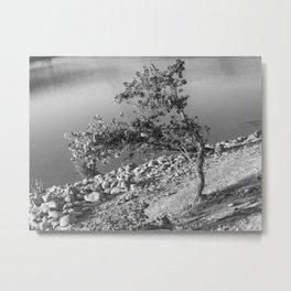 Tree and rocks Metal Print