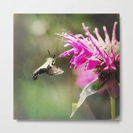 Hummigbird Bees Metal Print