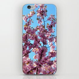 spring pink  blossoms iPhone Skin