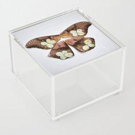 Moth with Yellow Flowers Acrylic Box