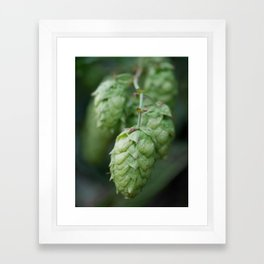 Humulus lupulus, the Common Hop Framed Art Print