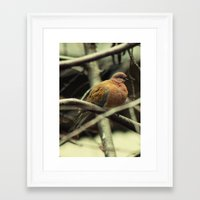 pigeon Framed Art Prints featuring Pigeon by Zura
