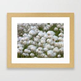 Cotton grass Framed Art Print