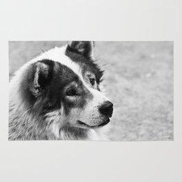 Street Dog Rug