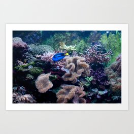 Just keep swimming.... Art Print
