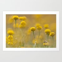 A little honey bee feeding on yellow spring marigolds Art Print
