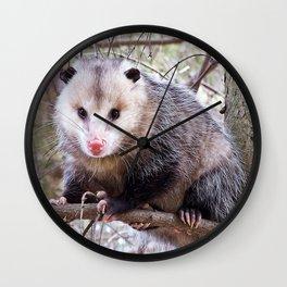 Possum Staredown Wall Clock