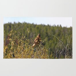 Red-tailed Hawk in the Tetons Rug