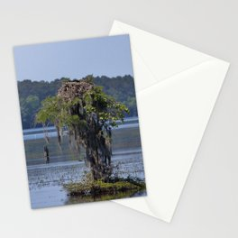 Bald Eagle On Cypress Stationery Cards