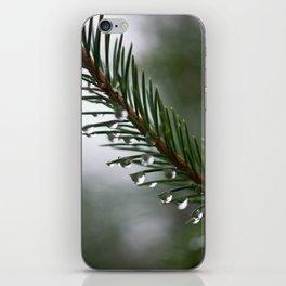 Rain on Pine Needles iPhone Skin