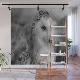 Snowy Owl - B & W Wall Mural