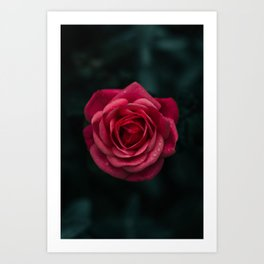 Flower Photography by aaron staes Art Print