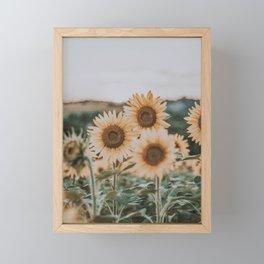 sunflower field ii Framed Mini Art Print