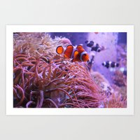 nemo Art Prints featuring Nemo by Joanna Dickinson