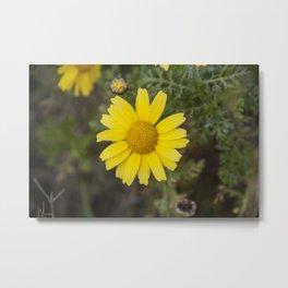 Daisy flower cu yellow Metal Print