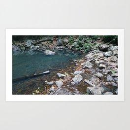 Natural Pond Art Print