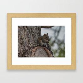 Squirrel Tail Framed Art Print