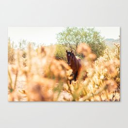 Wild Horse and Cholla Canvas Print