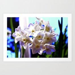 Paperwhite Narcissus Art Print