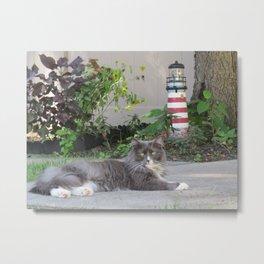 Sassy the Cat Relaxing Metal Print