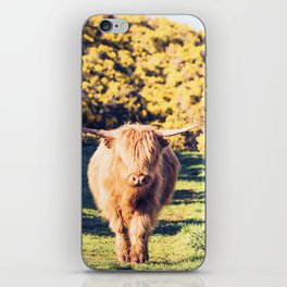 Lovely Scotland Highland Cow (Scottish Highland Cattle) is walking in the sun iPhone Skin