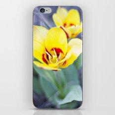 Early Bloom iPhone & iPod Skin