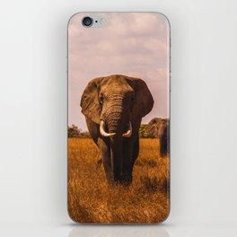 Elephant Safari (Color) iPhone Skin