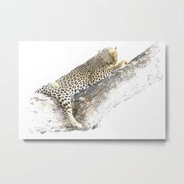 Lazy Leopard Metal Print