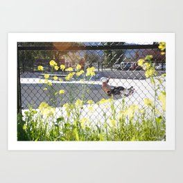 Ty Olsen. Frontside 5-0  Art Print