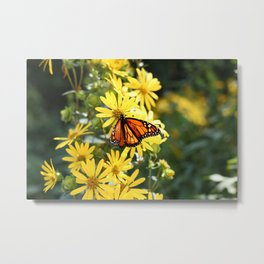 Monarch Butterfly on Yellow Daisies Metal Print
