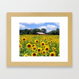 Sunflowers with Barn in Distance Framed Art Print
