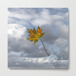 Maple leaf in autumn Metal Print