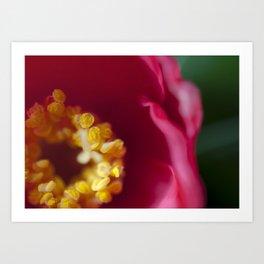 Rhododendron Pollen  Art Print