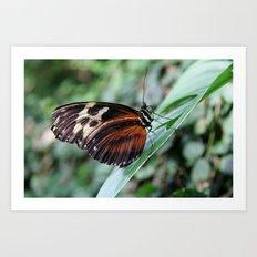 Butterfly Perching Art Print
