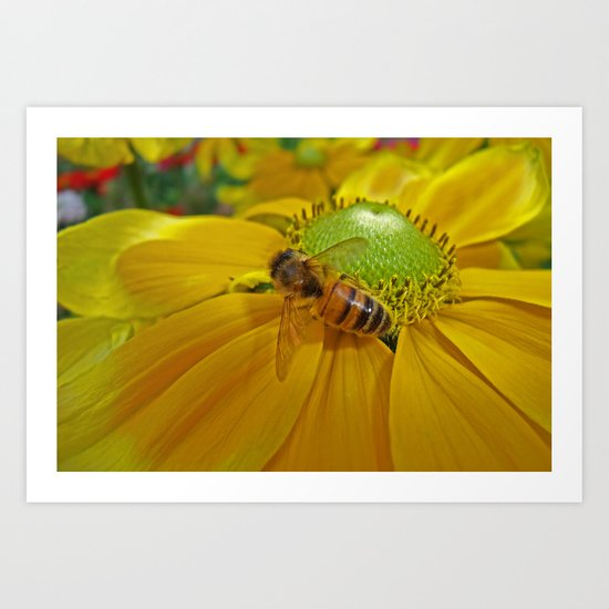 Honey Bee and Dahlia Art Print