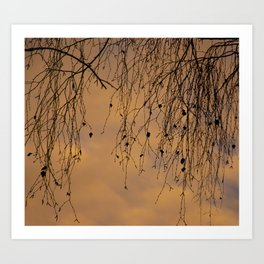 sunny branches and clouds Art Print