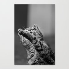 my little cat Canvas Print