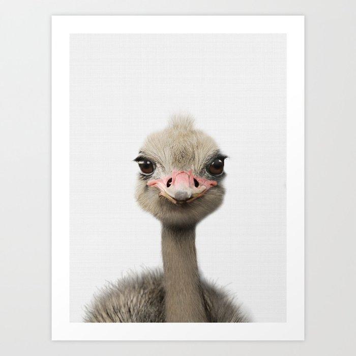 Ostrich Print Baby Animal Nursery Art Prints